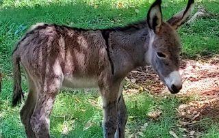 new donkey